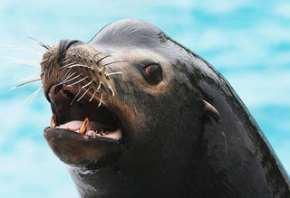 Video shows sea lion snatching girl from pier