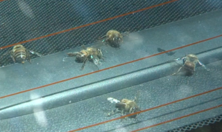 Thousands of bees attack mom walking with baby