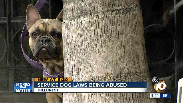 service dog laws