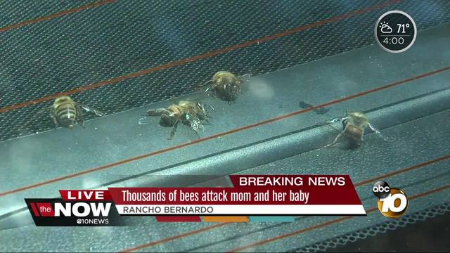 Thousands of bees attack mom and her baby in Rancho Bernardo
