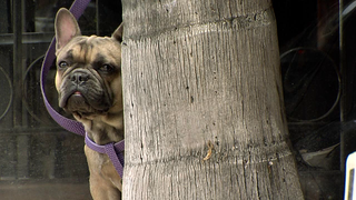 SD businesses crack down on service dog abuse