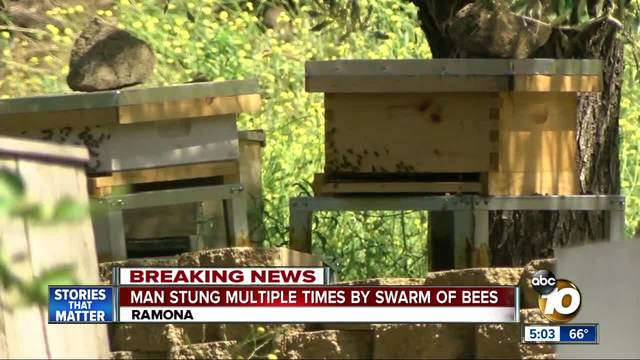 Man stung multiple times by swarm of bees in Ramona