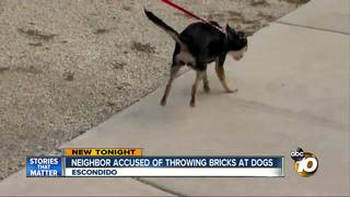 Neighbor accused of throwing rocks at dogs