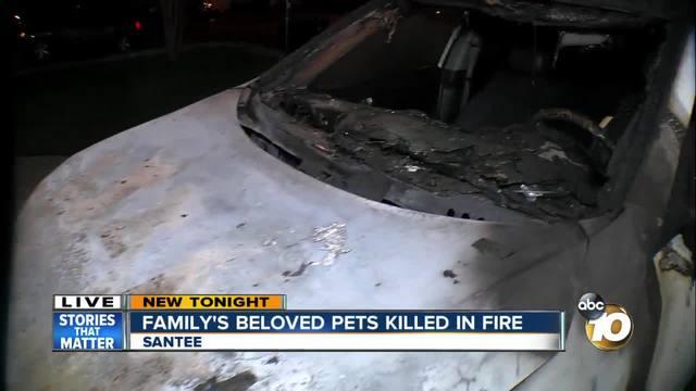 Family-s beloved pets killed in devastating fire