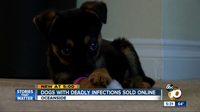 Dog with deadly infection sold online