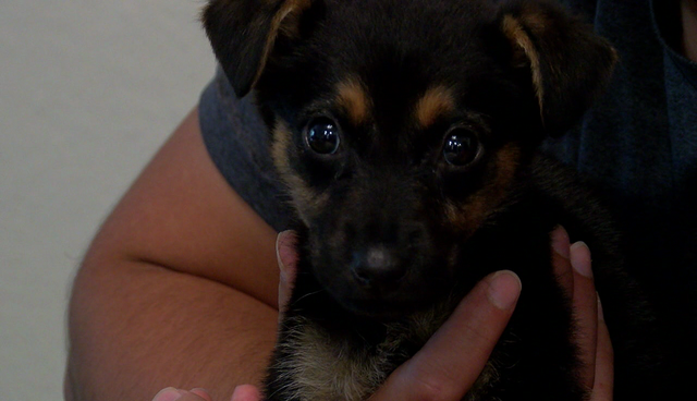 San Diego couple says dogs sold on Craigslist have deadly ...