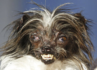 World's Ugliest Dog Contest awards inner beauty