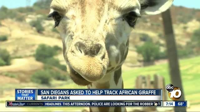 San Diegans asked to help track African giraffe