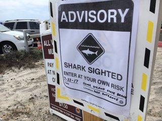 Shark advisory in effect at Silver Strand Beach