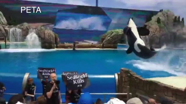 'Babe' Actor And Vegan Activist James Cromwell Arrested At Seaworld Protest