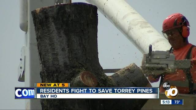 Residents fight to save Torrey Pines