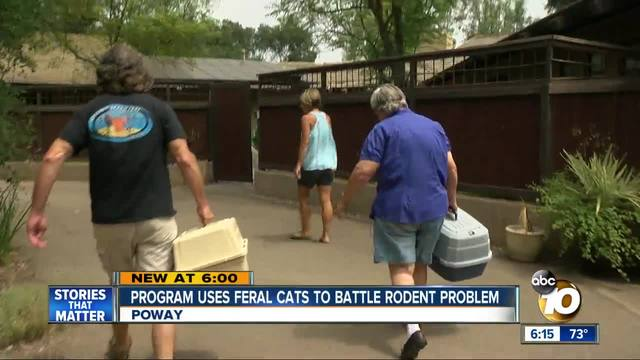 Program uses feral cats to battle rodent problem