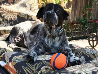 New plan sought for resuce dog Dwayne 'The Rock'