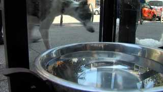 Intestinal disease attacking dogs downtown