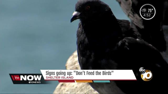 Signs going up- Don-t feed the birds