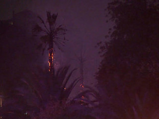 Palm trees catch fire off I-8 in Kensington area