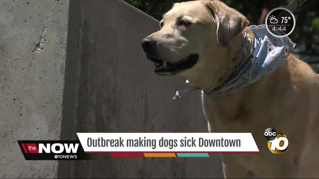 Dog disease on the rise in San Diego