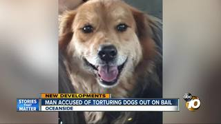 Accused dog torturer out on bail