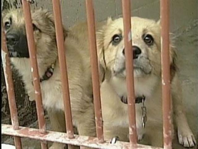 Free pet adoption this weekend at the Greenbrier Humane Society