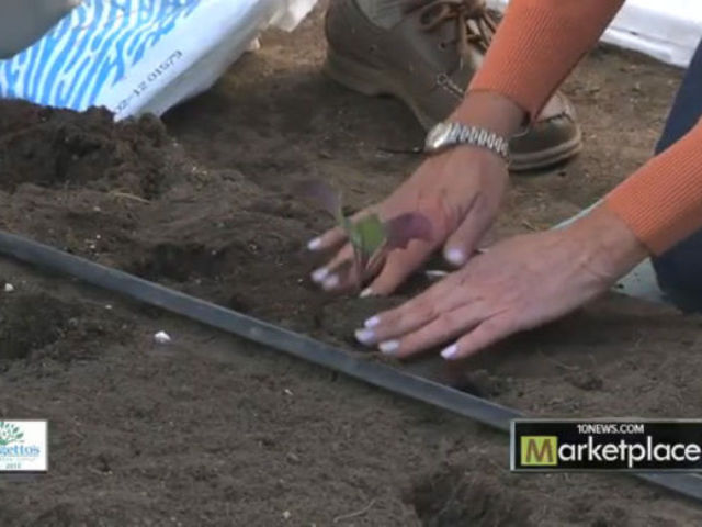 Planting Fall And Winter Vegetables
