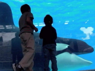 Laws could mean end of SeaWorld as we know it