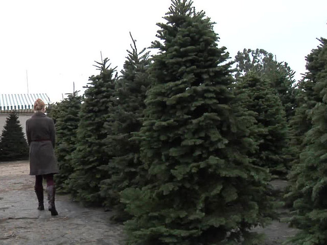 amazon will sell ship full size real christmas trees this year