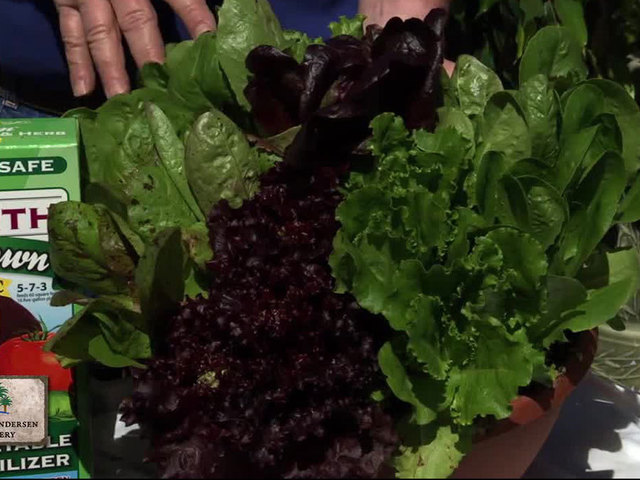 Garden Talk: Vegetables
