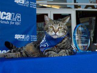 Tara the cat receives special 'Hero Dog' award