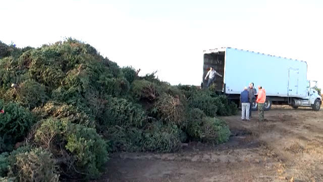 Phoenix Officials Want Residents To Recycle Their Christmas Trees