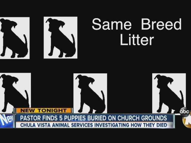 Pastor finds 5 puppies buried on church grounds