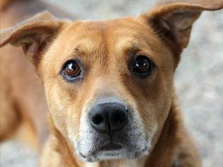 Pet of the Week: Ember