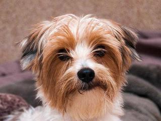 Pet of the Week: Buddy