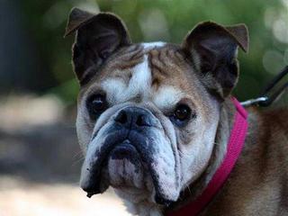 Pet of the Week: Gigi