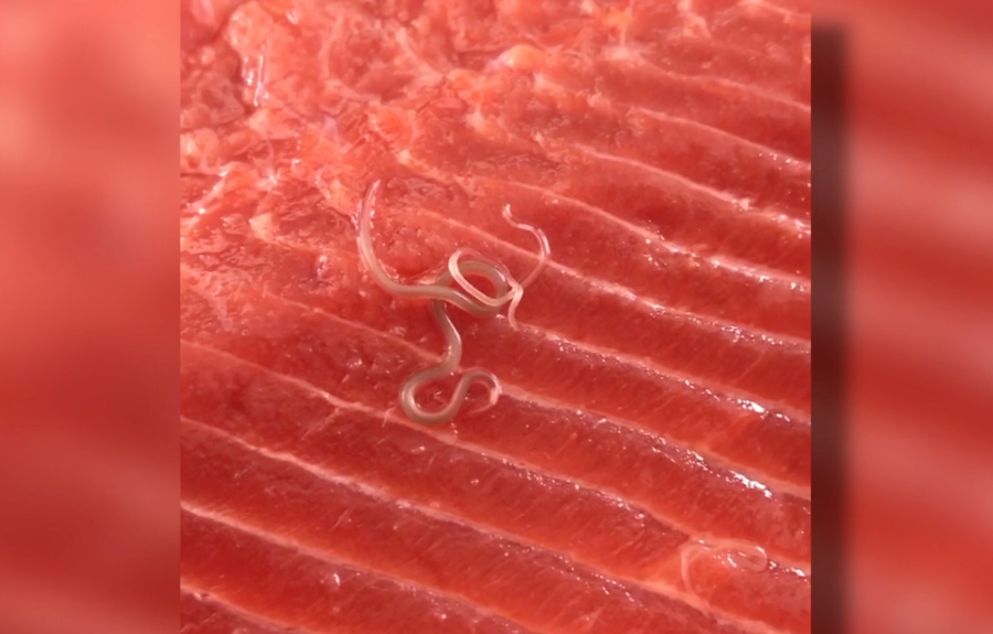 Worms Found In Salmon Bought From Costco 10news Com Kgtv