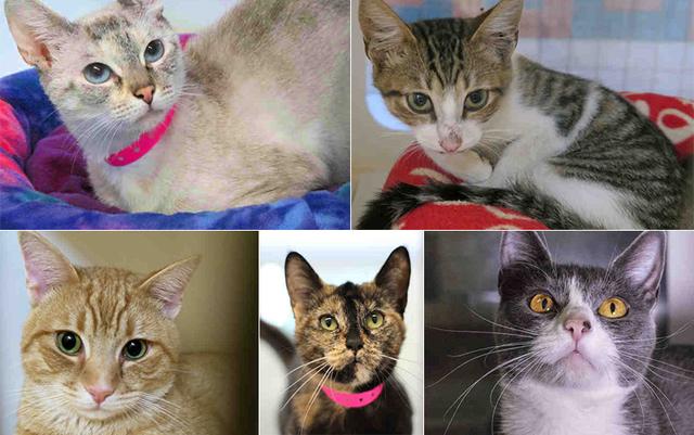 Cat Adoption San Bernardino County