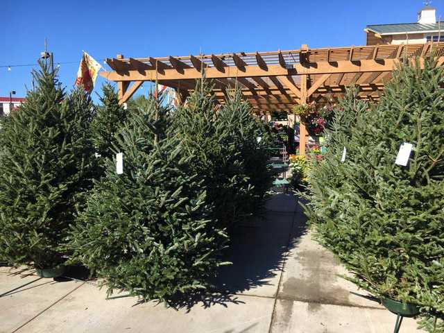 you may want to add christmas tree to your black friday shopping list this year the national christmas tree association says they expect a shortage
