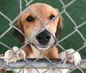 Dogs travel 1,847 miles for forever homes in SD