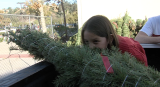 Christmas trees given to military families