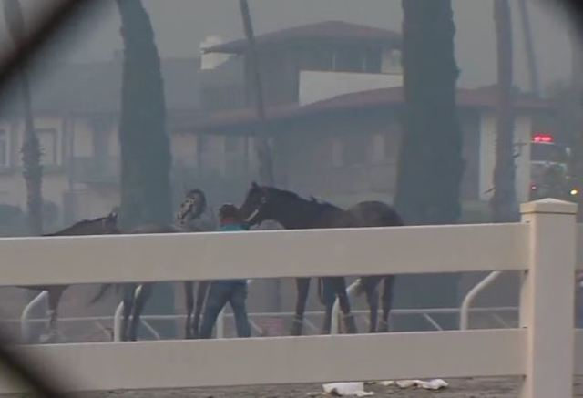People risk their lives to free hundreds of horses from unsafe fire
