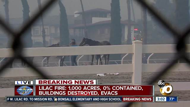Frantic horses run loose as Lilac Fire threatens Bonsall barn