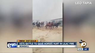 Vets treating horses hurt in Lilac Fire