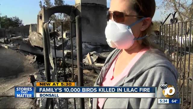 Family-s 10-000 birds killed in Lilac Fire