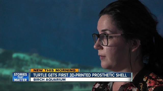 Injured turtle gets first ever 3D Printed shell prosthetic at Birch Aquarium