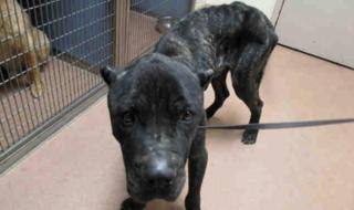Starving dog saved by Good Samaritan