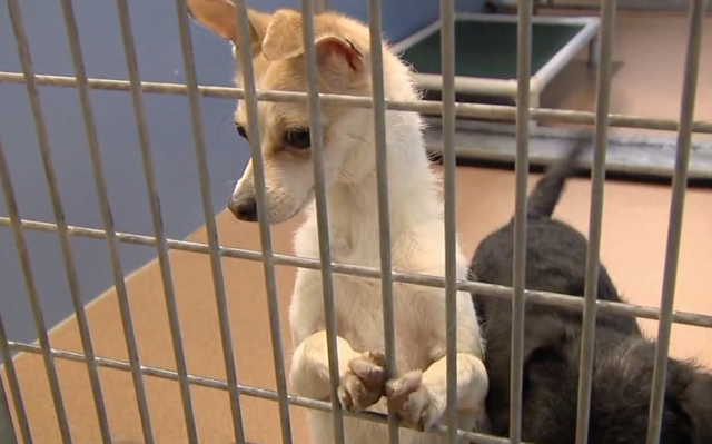 City approves contract with Humane Society for animal services