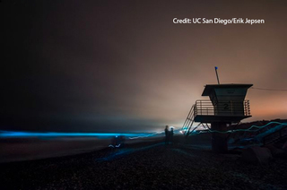 PHOTOS: San Diegans capture red tide's neon glow