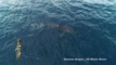 VIDEO: Shark chases seal off coast of San Diego