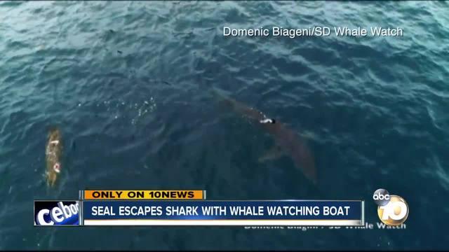 Shark Attacks at San Diego Beaches - Thrillist