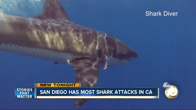 North County woman 'fighting for her life' after shark ...