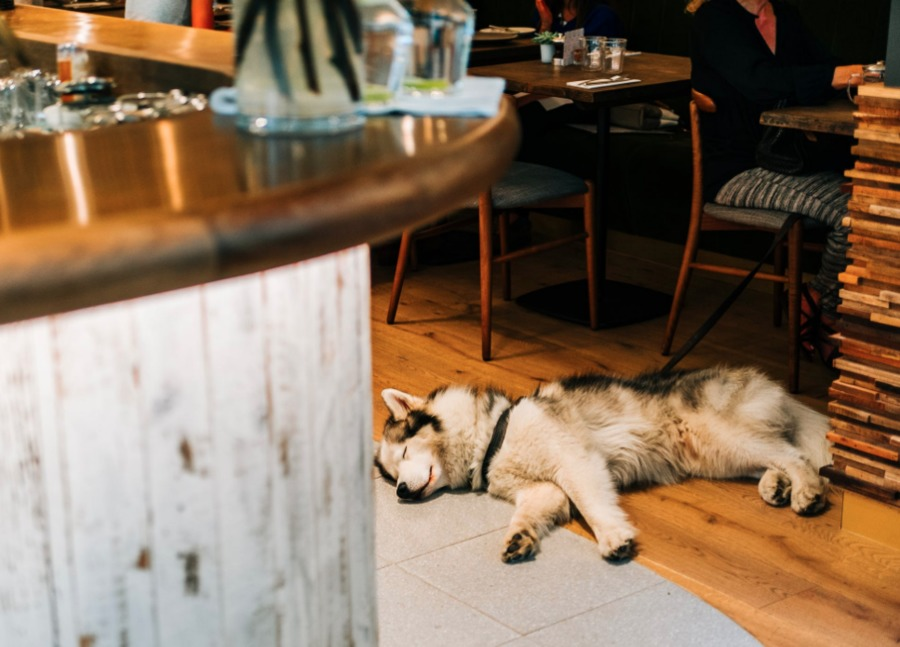 Restaurant, bars where you can bring your dog in San Diego